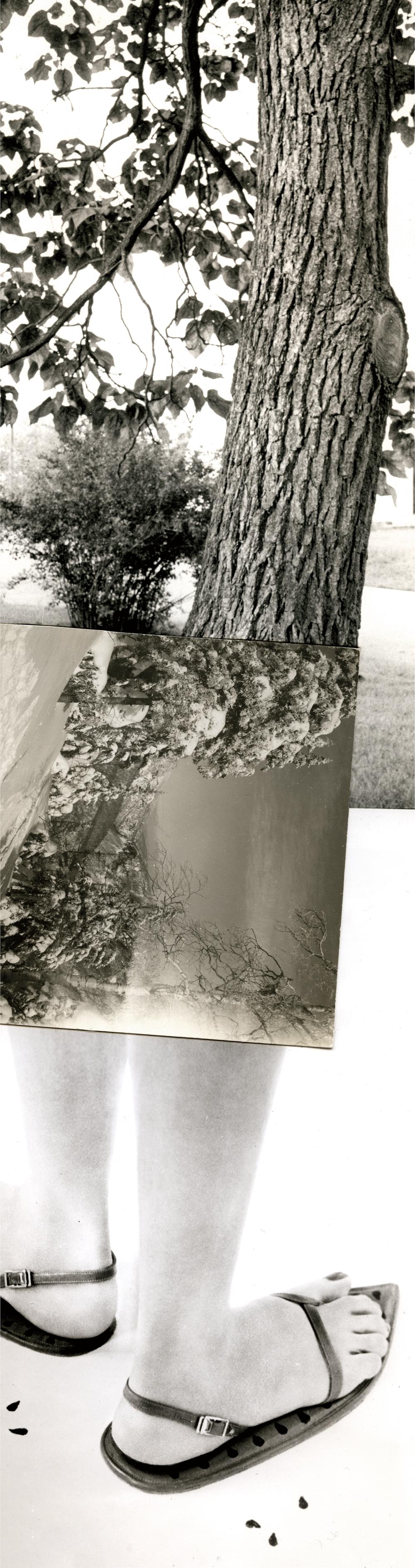 collage_segovia_muda_collage_arbolB