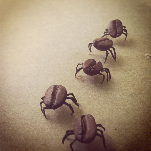 ilustracion_Coffee-ckroaches