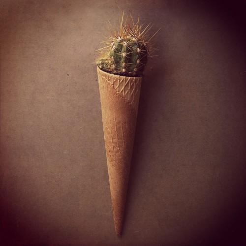 ilustracion_helado_cactus