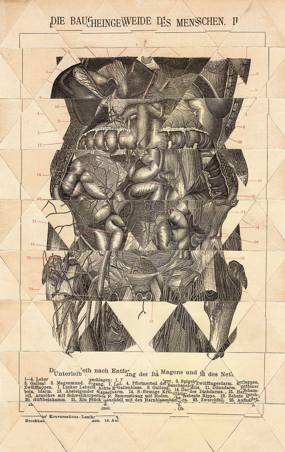 collage_humanbody_triangulos